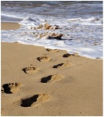 Footprints in the Sand; | TCM 5-Element Natural Inspirations for health